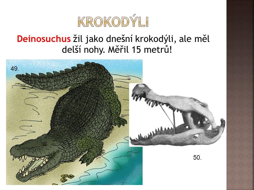 krokodýli Deinosuchus žil jako dnešní krokodýli, ale měl delší nohy. Měřil 15 metrů! 49. 50.