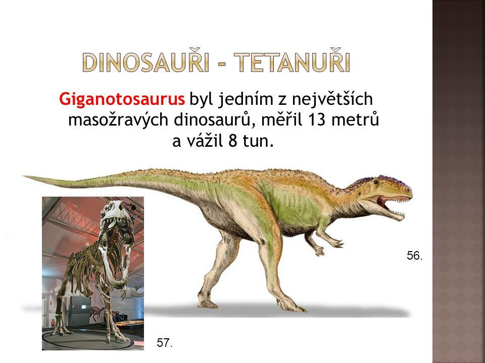 Dinosauři - tetanuři Giganotosaurus byl jedním z největších masožravých dinosaurů, měřil 13 metrů a vážil 8 tun.