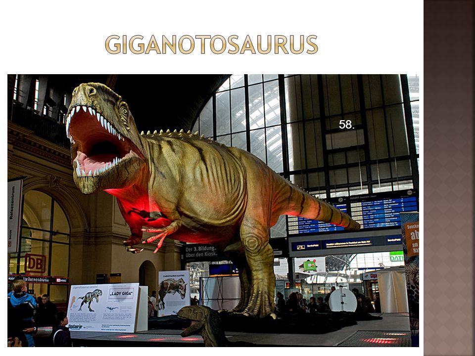giganotosaurus 58.