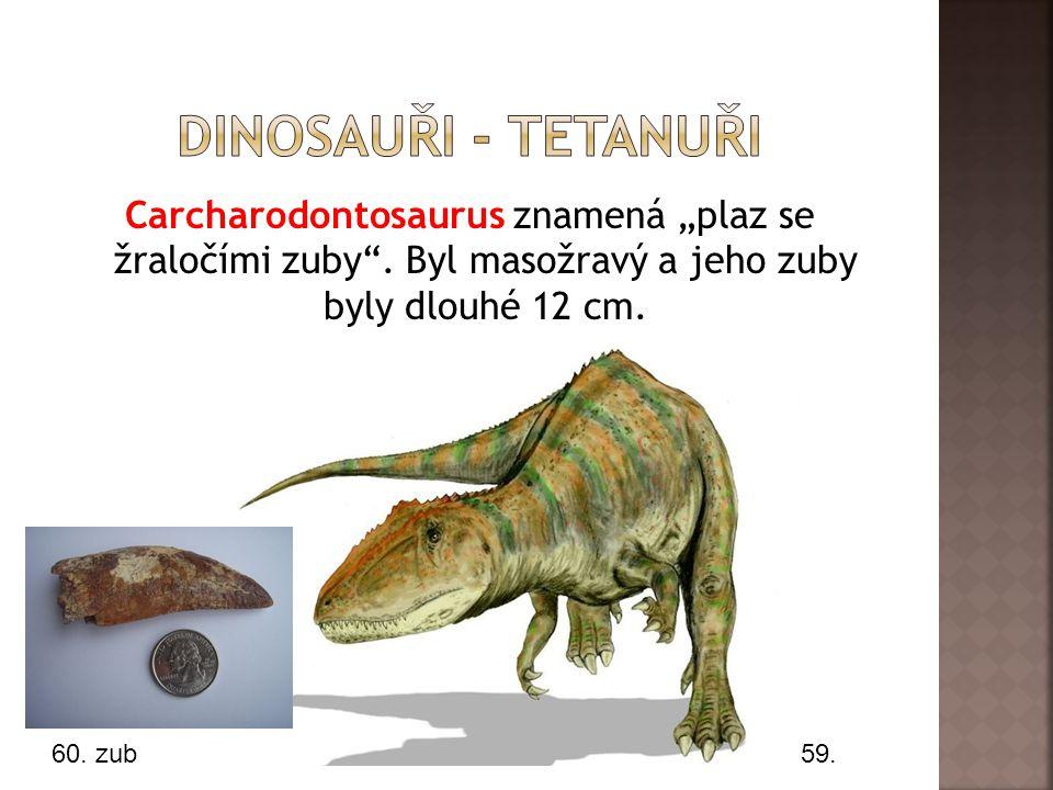 """Dinosauři - tetanuři Carcharodontosaurus znamená """"plaz se žraločími zuby . Byl masožravý a jeho zuby byly dlouhé 12 cm."""