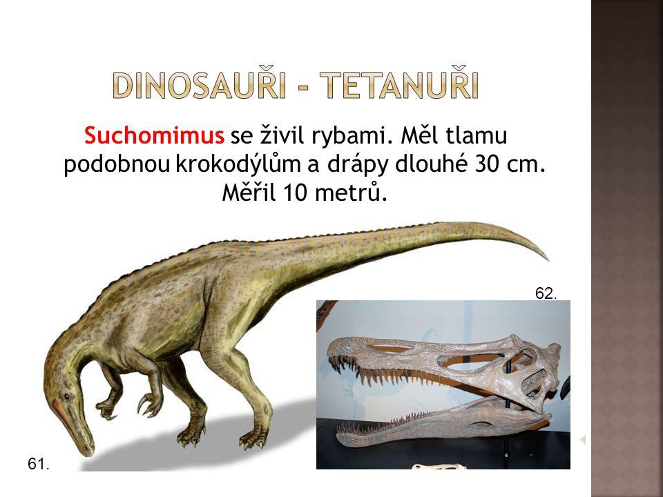 Dinosauři - tetanuři Suchomimus se živil rybami. Měl tlamu podobnou krokodýlům a drápy dlouhé 30 cm. Měřil 10 metrů.