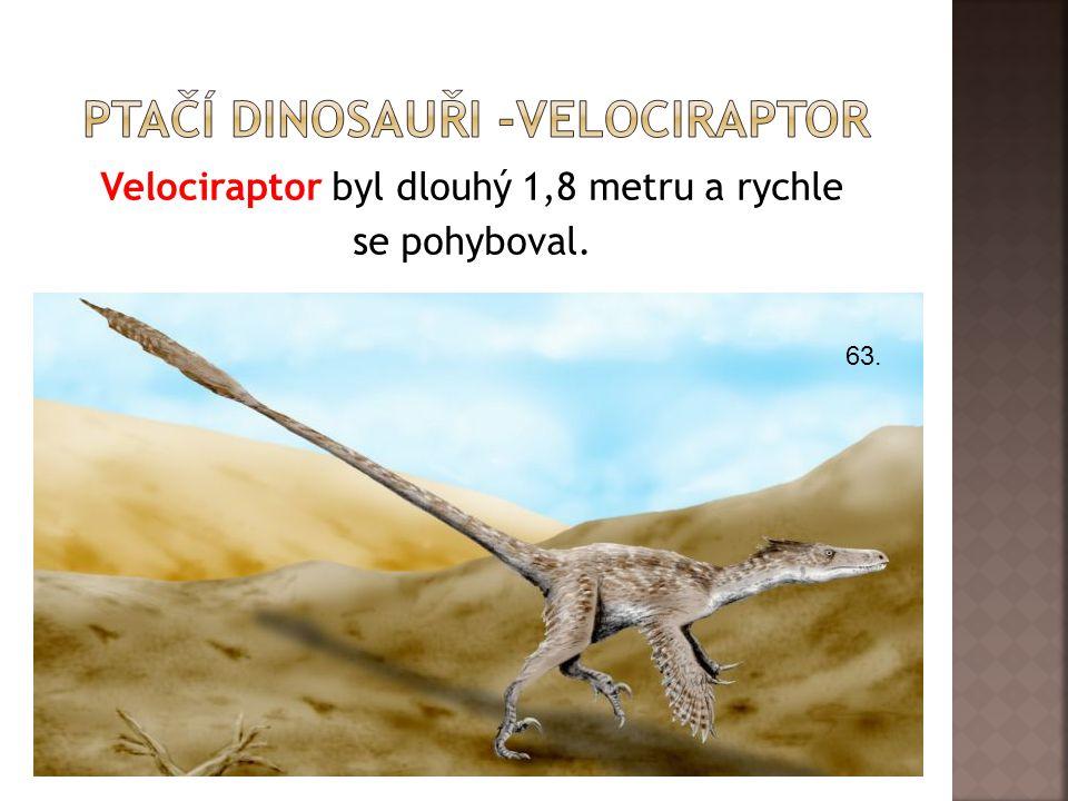 Ptačí dinosauři -velociraptor