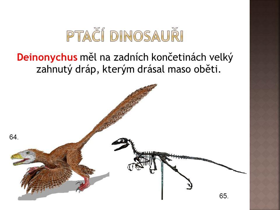 Ptačí dinosauři Deinonychus měl na zadních končetinách velký zahnutý dráp, kterým drásal maso oběti.