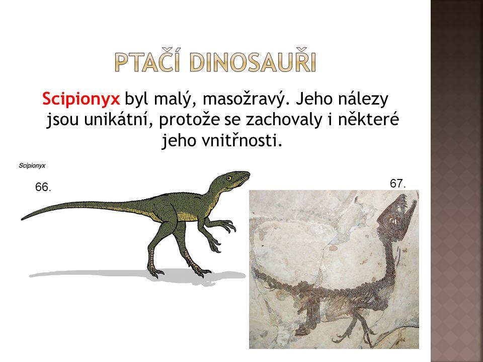 Ptačí dinosauři Scipionyx byl malý, masožravý. Jeho nálezy jsou unikátní, protože se zachovaly i některé jeho vnitřnosti.