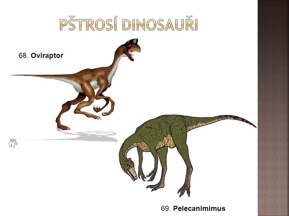 Pštrosí dinosauři 68. Oviraptor 69. Pelecanimimus