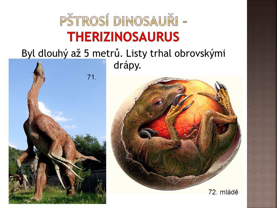 Pštrosí dinosauři - therizinosaurus