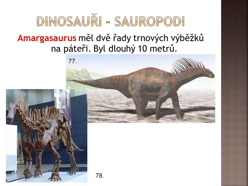 Dinosauři - sauropodi Amargasaurus měl dvě řady trnových výběžků na páteři. Byl dlouhý 10 metrů. 77.