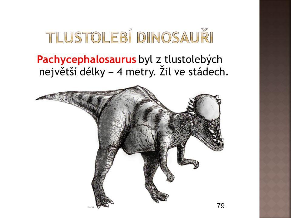 Tlustolebí dinosauři Pachycephalosaurus byl z tlustolebých největší délky ‒ 4 metry. Žil ve stádech.