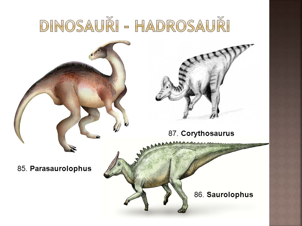 Dinosauři - hadrosauři
