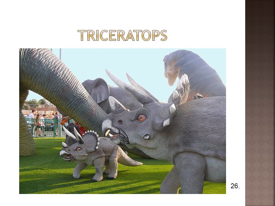 triceratops 26.