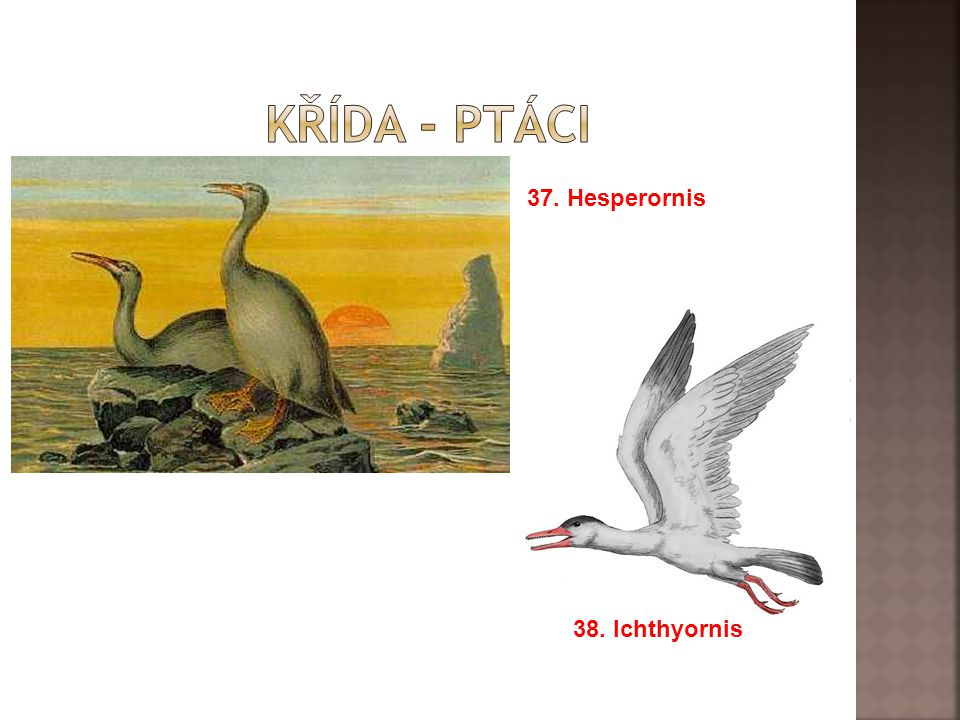 Křída - ptáci 37. Hesperornis 38. Ichthyornis