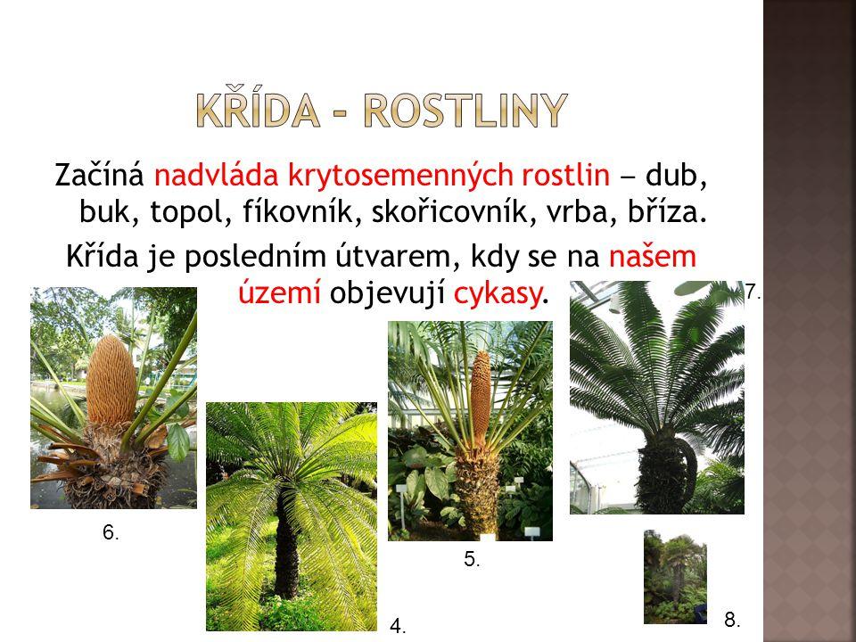 Křída - rostliny