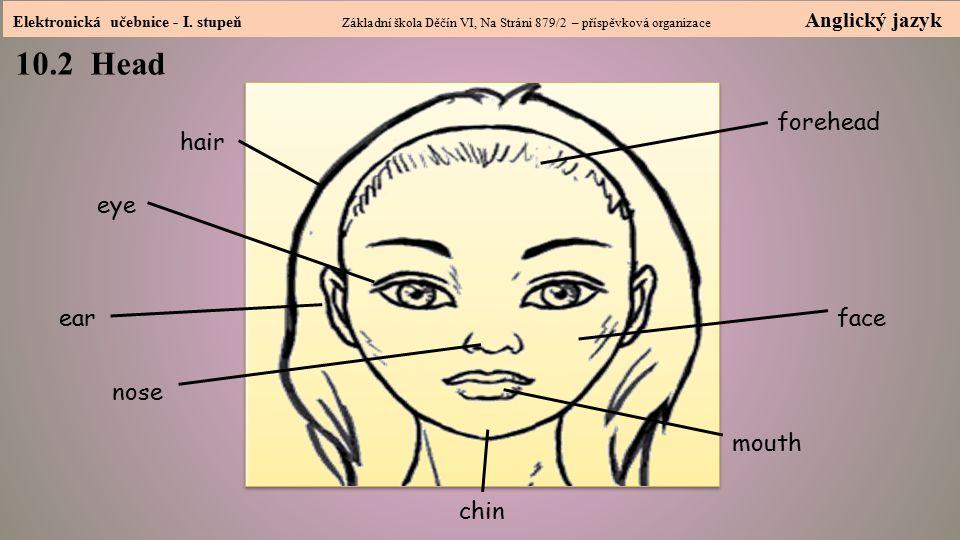 10.2 Head Head forehead hair eye ear face nose mouth chin