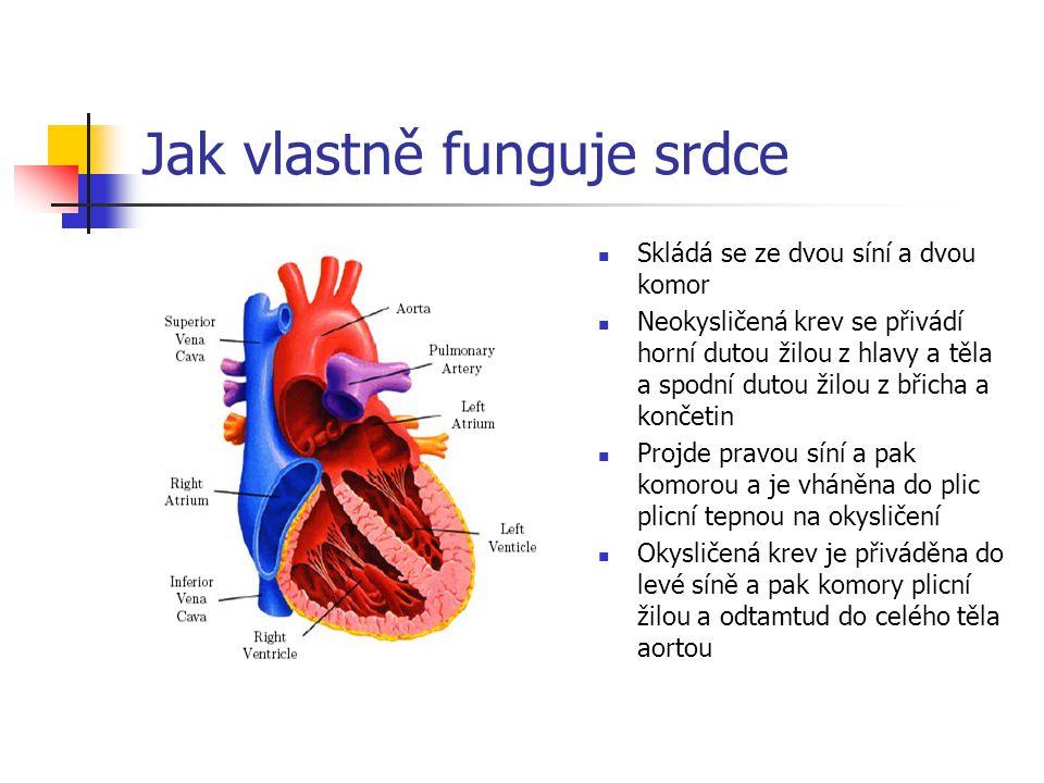 Jak vlastně funguje srdce