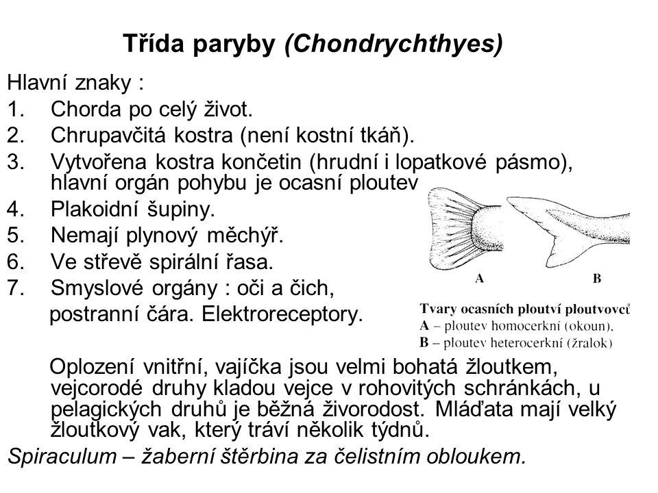 Třída paryby (Chondrychthyes)