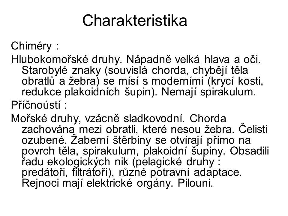 Charakteristika Chiméry :