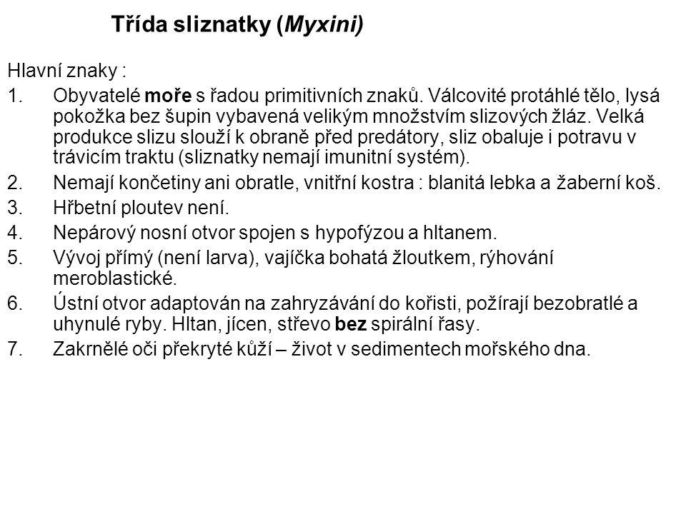 Třída sliznatky (Myxini)