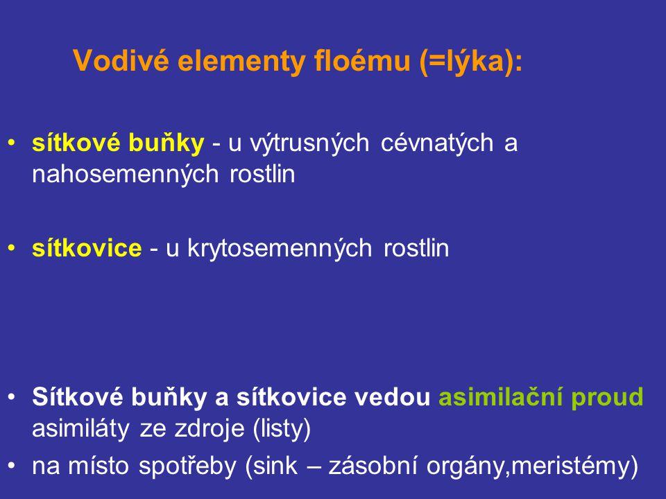 Vodivé elementy floému (=lýka):
