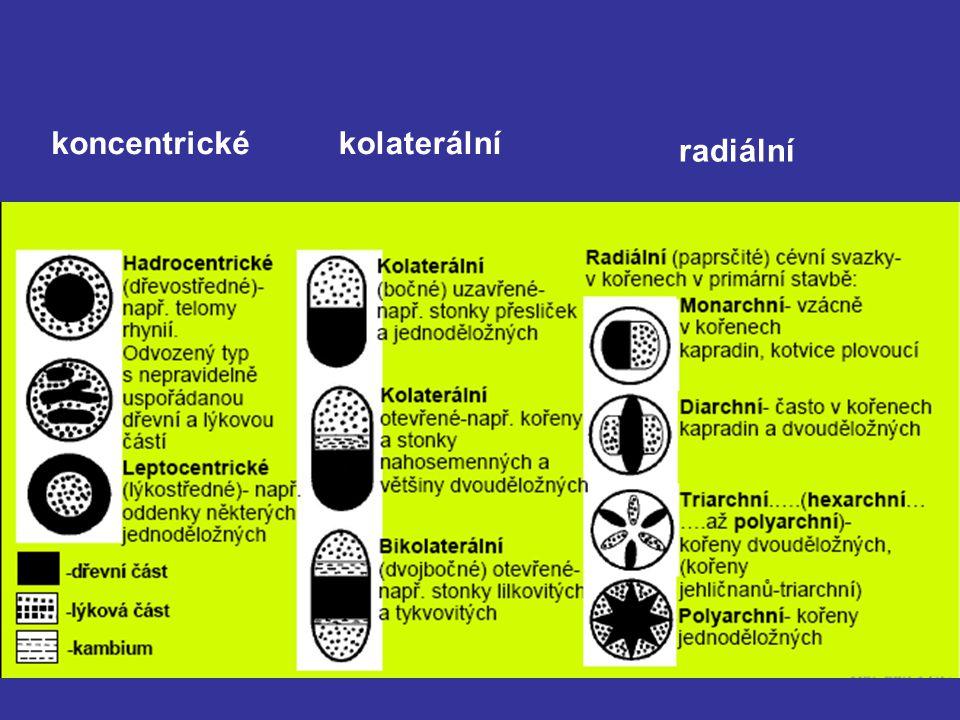 koncentrické kolaterální radiální