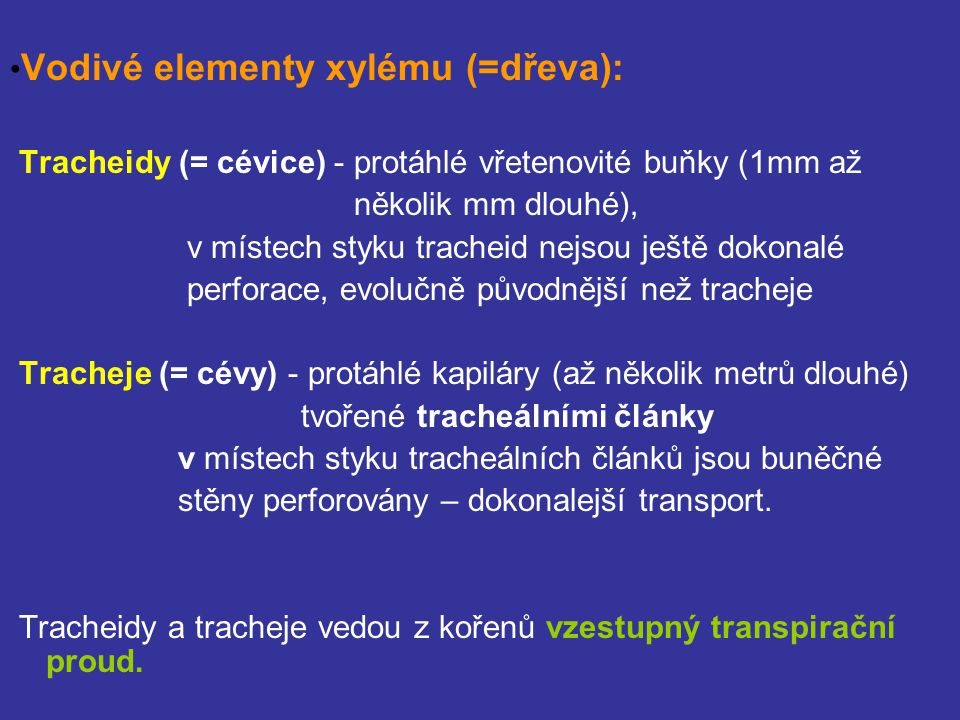 •Vodivé elementy xylému (=dřeva):