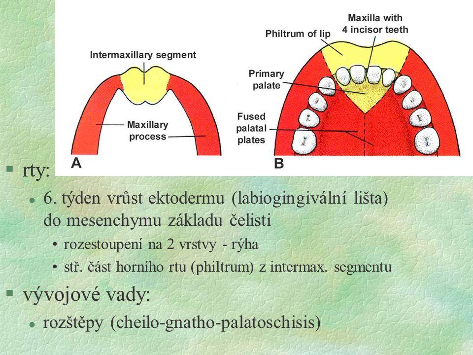 rty: 6. týden vrůst ektodermu (labiogingivální lišta) do mesenchymu základu čelisti. rozestoupení na 2 vrstvy - rýha.