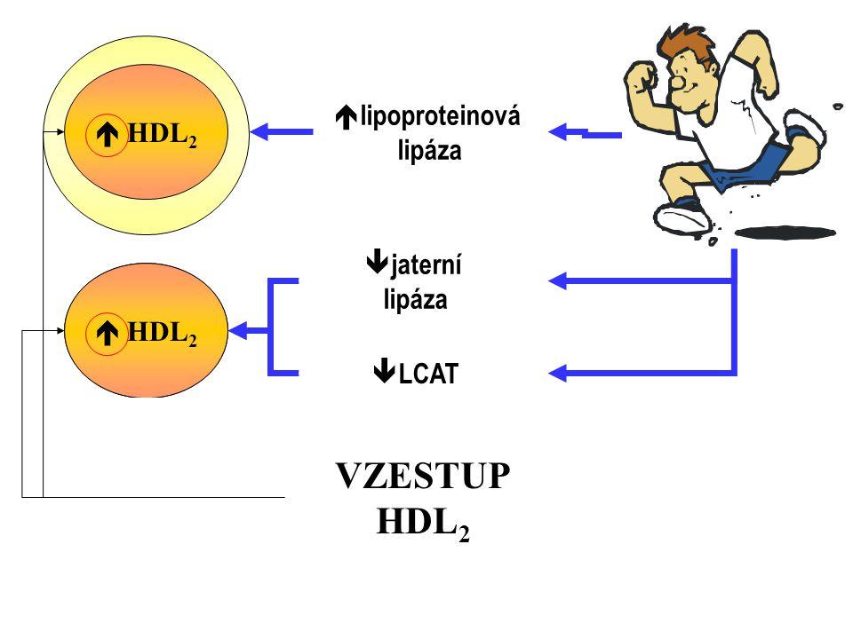 VZESTUP HDL2 VLDL  HDL2 lipoproteinová lipáza jaterní lipáza