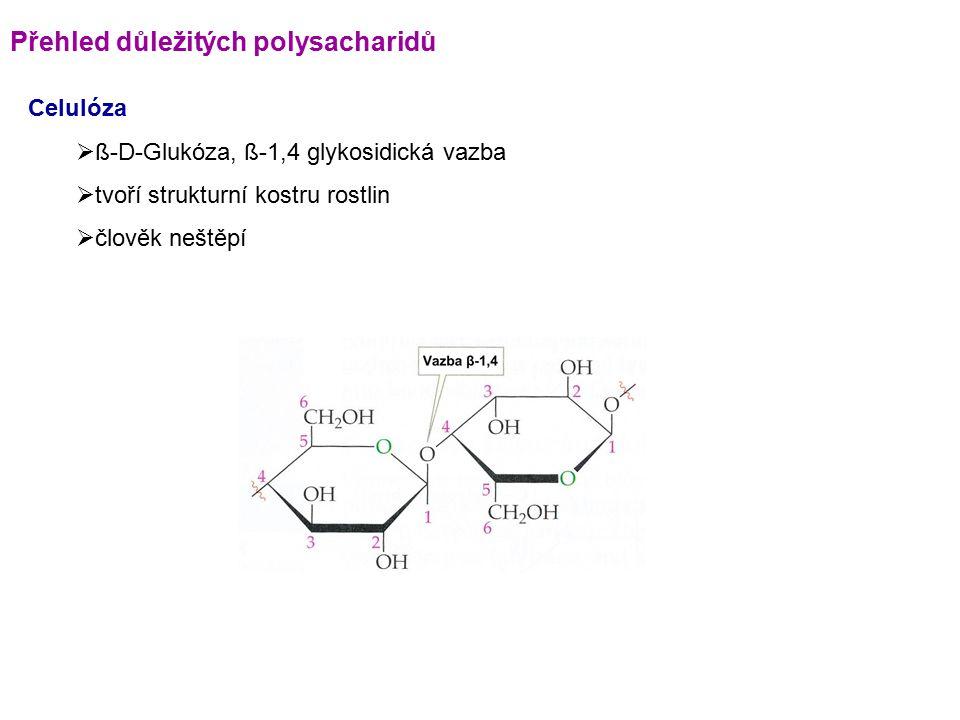 Přehled důležitých polysacharidů