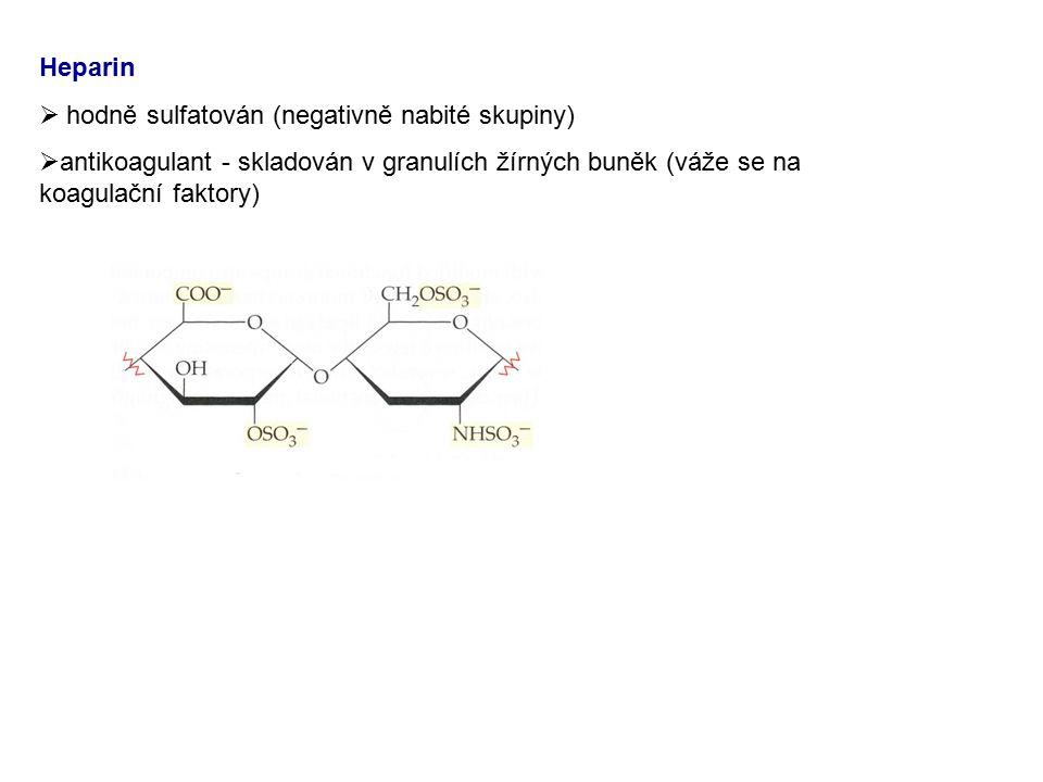 Heparin hodně sulfatován (negativně nabité skupiny) antikoagulant - skladován v granulích žírných buněk (váže se na koagulační faktory)