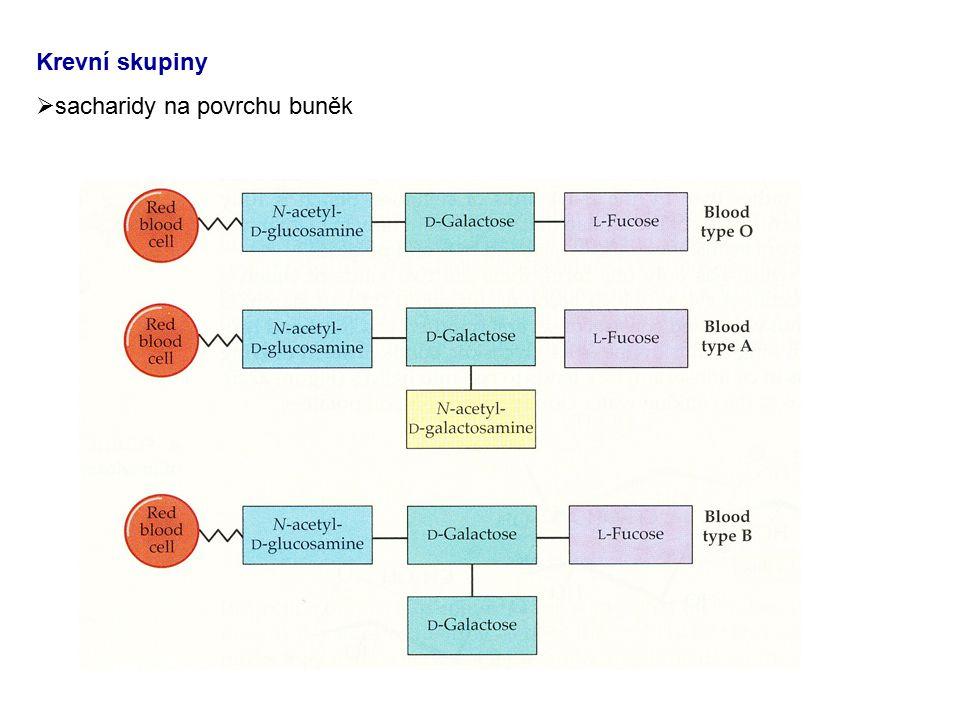 Krevní skupiny sacharidy na povrchu buněk