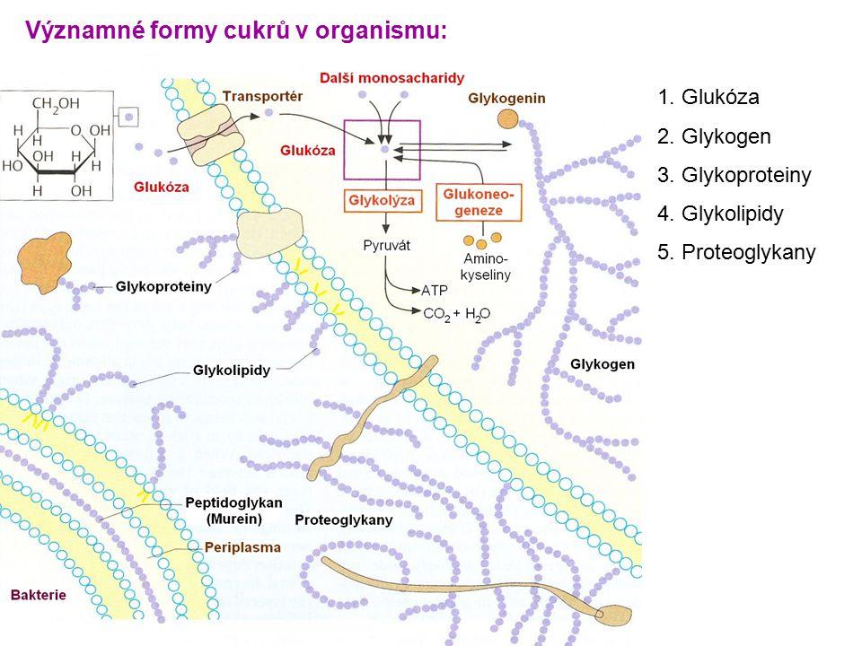 Významné formy cukrů v organismu: