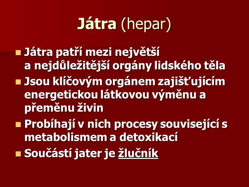 Játra (hepar) Játra patří mezi největší a nejdůležitější orgány lidského těla.