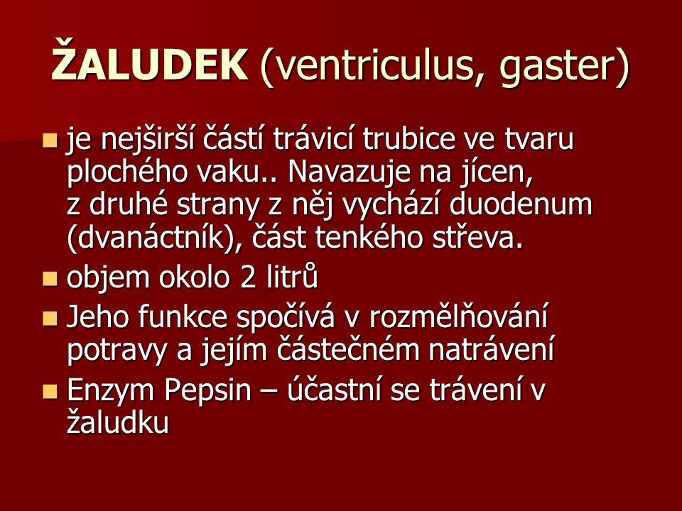 ŽALUDEK (ventriculus, gaster)