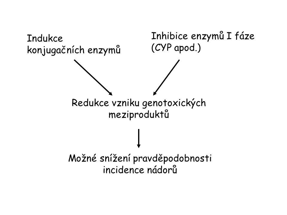 Inhibice enzymů I fáze (CYP apod.) Indukce konjugačních enzymů