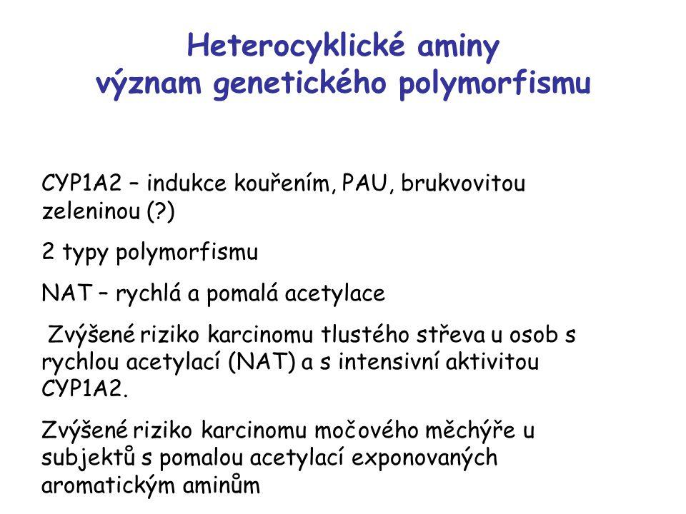 Heterocyklické aminy význam genetického polymorfismu