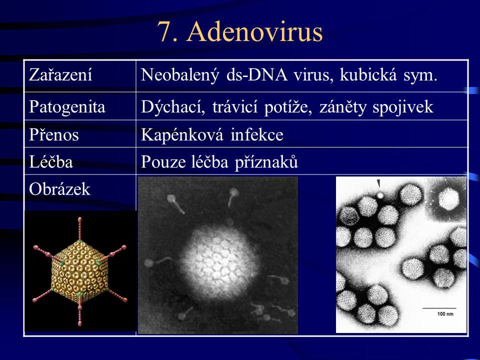 7. Adenovirus Zařazení Neobalený ds-DNA virus, kubická sym. Patogenita