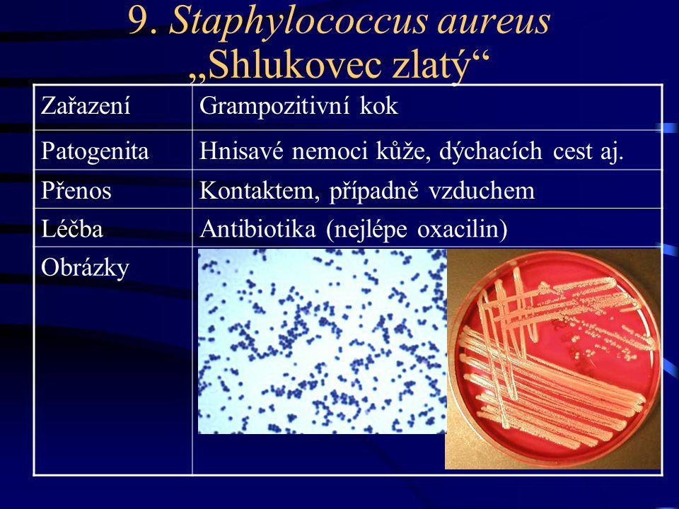 "9. Staphylococcus aureus ""Shlukovec zlatý"