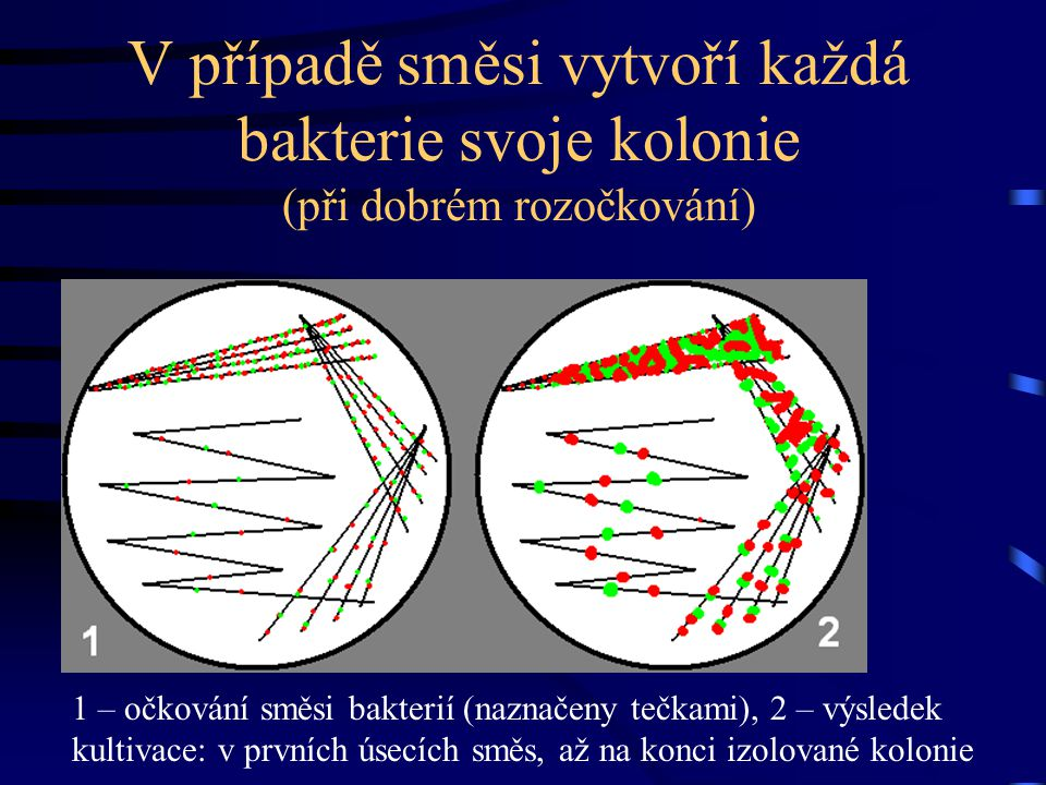 V případě směsi vytvoří každá bakterie svoje kolonie (při dobrém rozočkování)