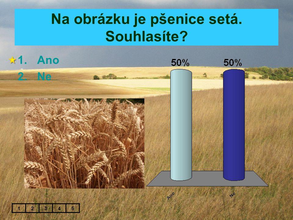 Na obrázku je pšenice setá. Souhlasíte