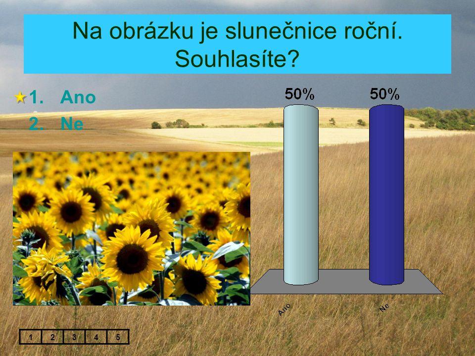 Na obrázku je slunečnice roční. Souhlasíte