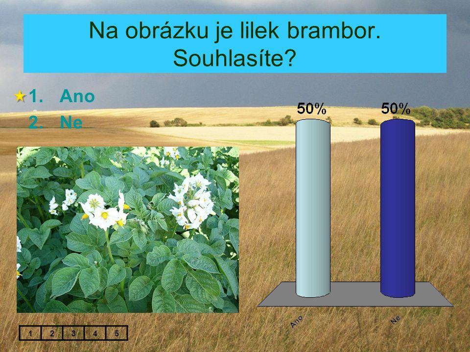 Na obrázku je lilek brambor. Souhlasíte