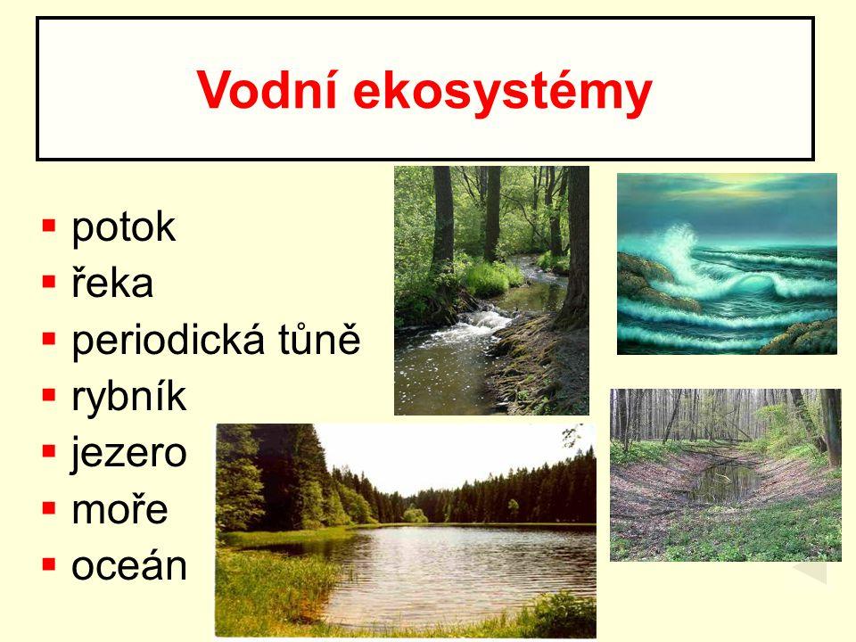 Vodní ekosystémy potok řeka periodická tůně rybník jezero moře oceán