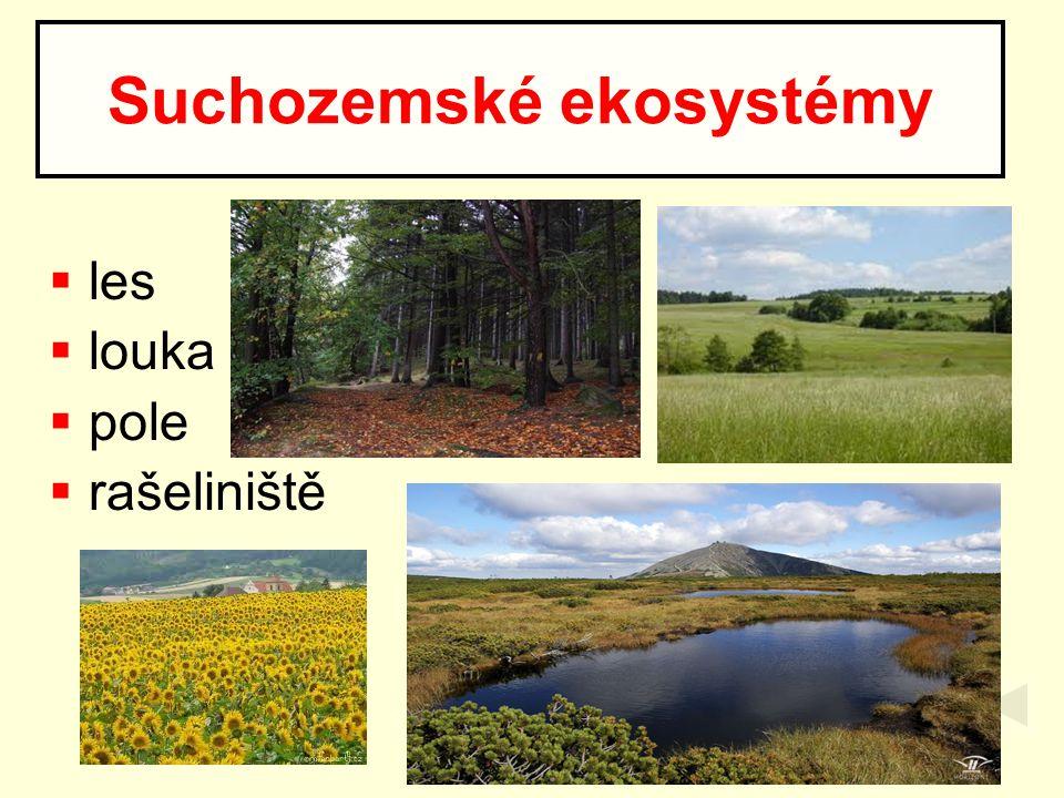 Suchozemské ekosystémy