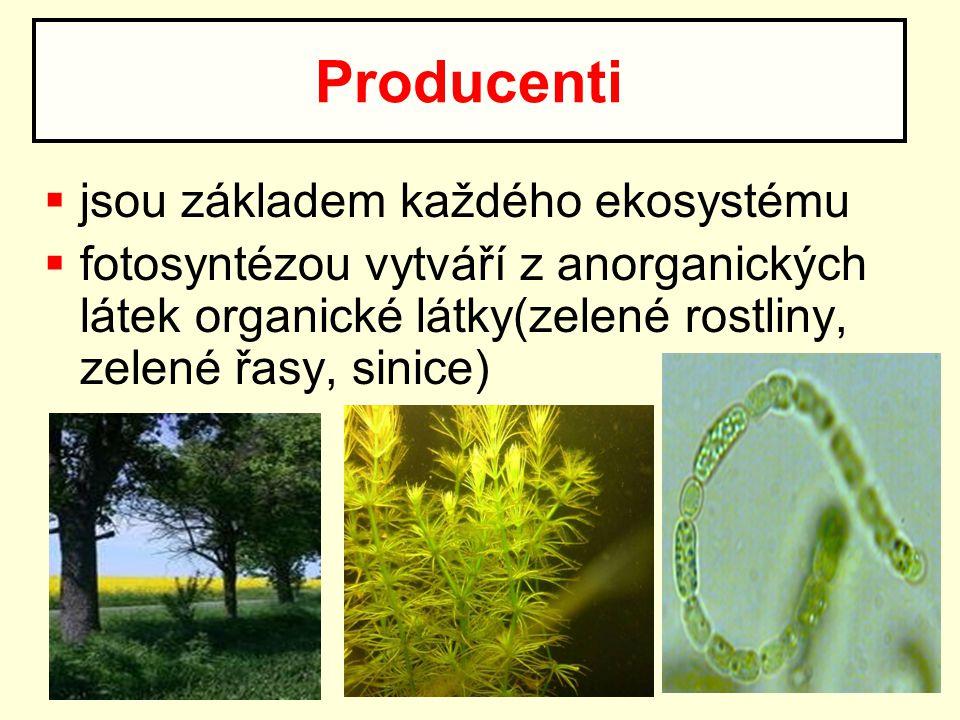 Producenti jsou základem každého ekosystému