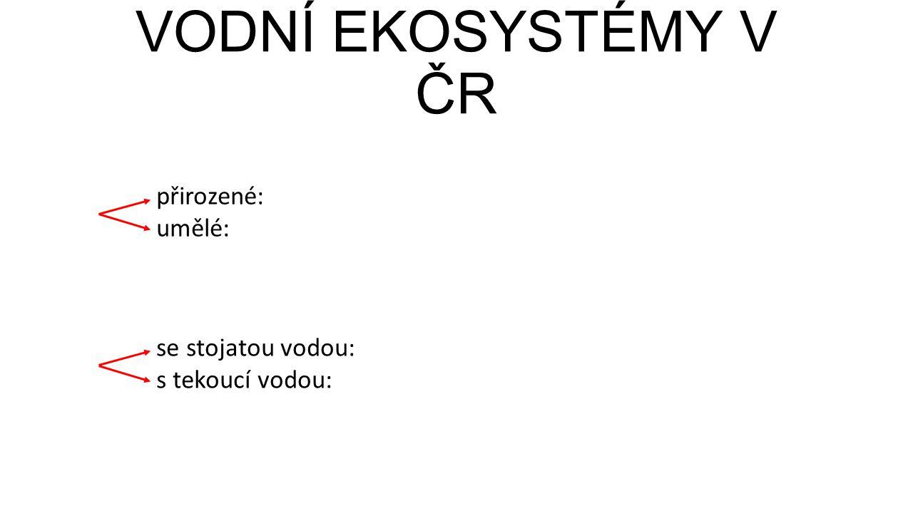 VODNÍ EKOSYSTÉMY V ČR přirozené: umělé: se stojatou vodou: