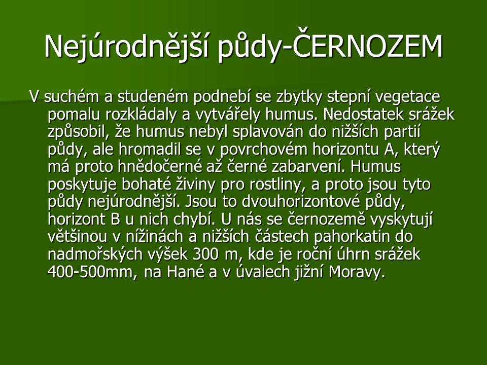 Nejúrodnější půdy-ČERNOZEM