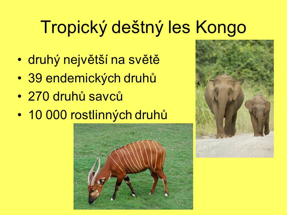 Tropický deštný les Kongo