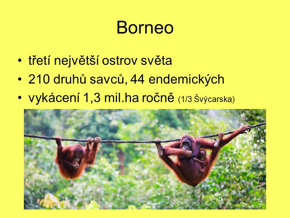 Borneo třetí největší ostrov světa 210 druhů savců, 44 endemických