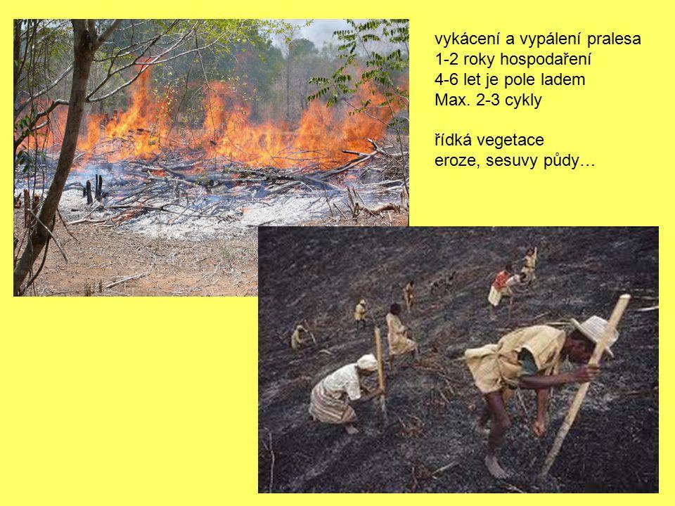 vykácení a vypálení pralesa
