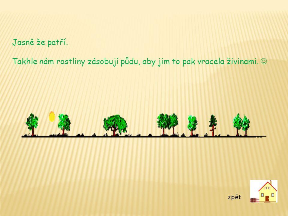 Takhle nám rostliny zásobují půdu, aby jim to pak vracela živinami. 