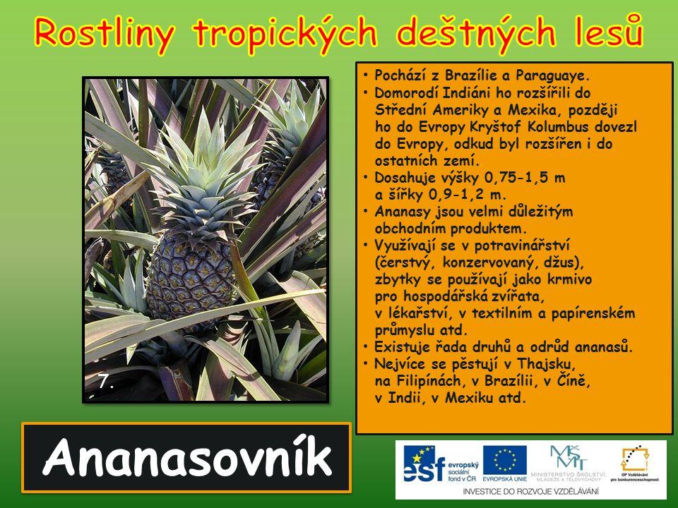 Rostliny tropických deštných lesů